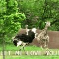 Forcing the love on giraffe