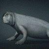 Gargoyle, the missing link in the evolution